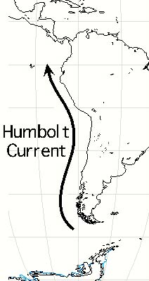 The Best Pelagic Birding In The World Coastal Chile Peru And The Humbolt Current